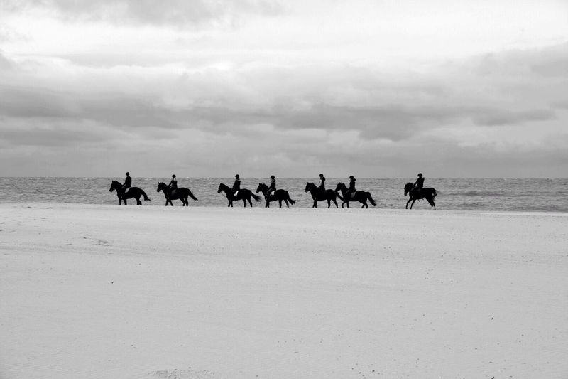 Contrast Blackandwhite Photography Beachphotography Horse Riding Horses EyeEm Best Edits Sea And Sky Seaside Landscape