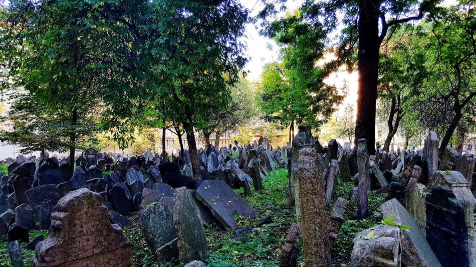 Tree Outdoors No People Tree Tombstones Empty Places Tombs Tombstone Graveyard Cemetery Gravestone Tomb Cemetery Photography Jewish Cemetery Jewish Museum Jewish Prague Old Cemetery Old Jewish Cemetery