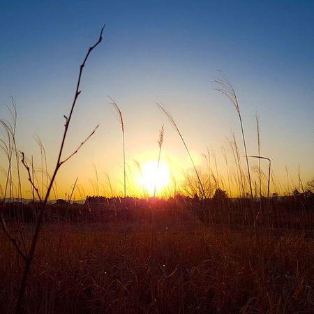 インスタの仕様が変わってアップした時間順じゃなくなったみたいですね😄 この写真は先週、実家に帰ったときの夕日です🌇 なかなかいい夕日でした。 風景 ダレカニミセタイケシキ 太陽 夕陽 田舎 写真撮ってる人と繋がりたい 写真好きな人と繋がりたい 三重 田んぼ Sunset カコソラ Landscape Instagood Team_jp_skyart Icu_japan Igers Igersjp Viewmysunset Loves_skyandsunset Wu_japan Japan_daytime_view S_shot Mie Sunset_stream Ptk_sky