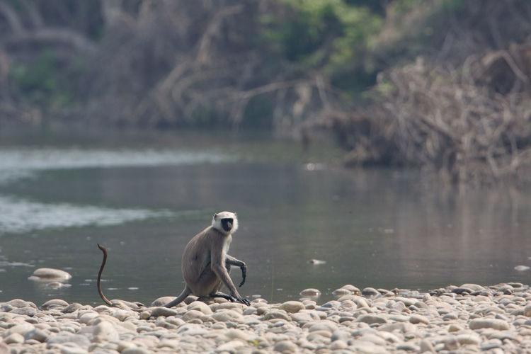 Bird sitting on rock by lake