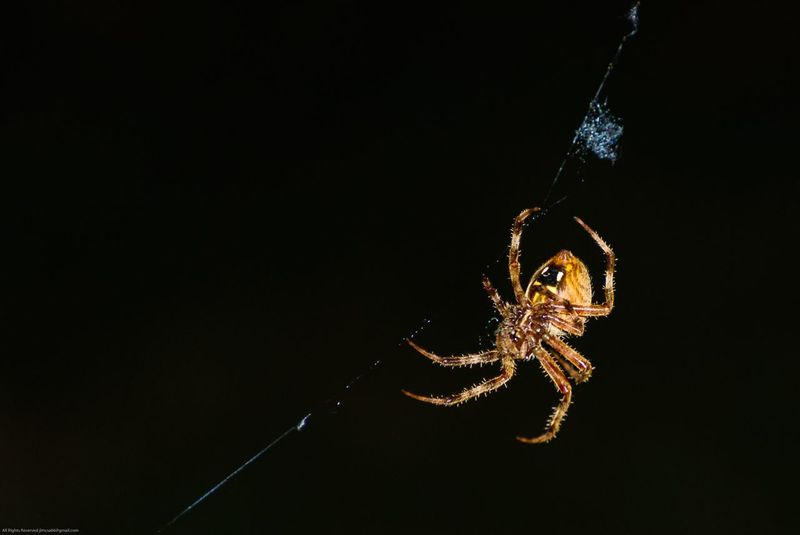 Spider(don't know what type) Check This Out Large Spider Nighttime Nightphotography Creepy