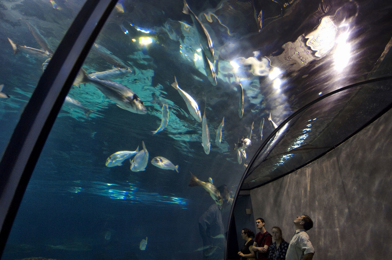 fish, aquarium, real people, sea life, large group of animals, animals in captivity, indoors, men, swimming, leisure activity, animals in the wild, water, lifestyles, women, nature, day, people