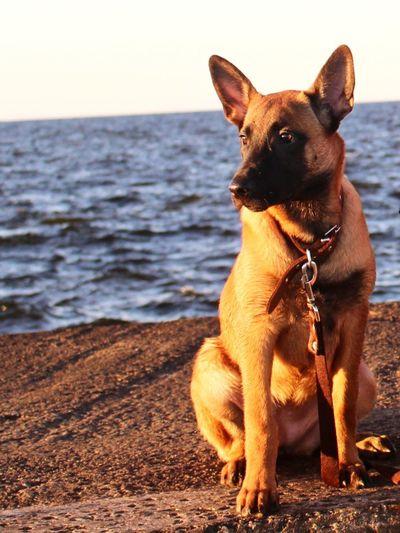 Pets Sea Water