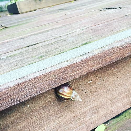 High angle view of snail
