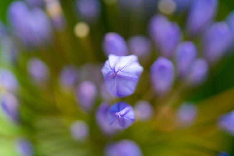 Macro of flowers Flowering Plant Flower Vulnerability  Petal Fragility Plant Freshness Close-up Purple