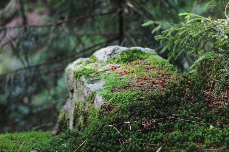 Tree Forest Moss Lush - Description Close-up Grass Plant Green Color