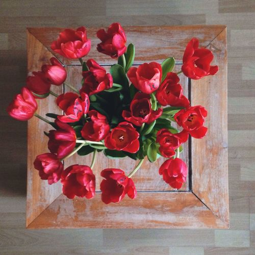 Red Tulips Scarlett Tulips Flowers Coffee Table St Valentine's Day