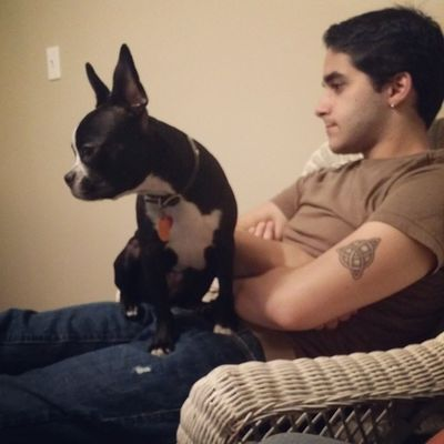 Peach enjoying American Horror Story with her Uncle Bryce. Puppy Bostonterrier PuppyLove Dogsofinstagram yeshomo gayboy