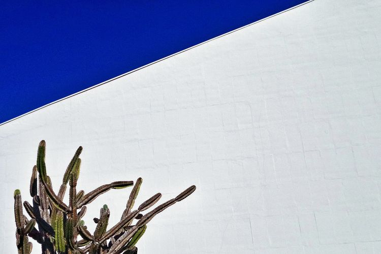Low angle view of cactus against white building