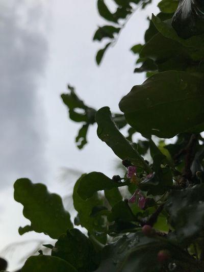 Novos Ventos 🍃