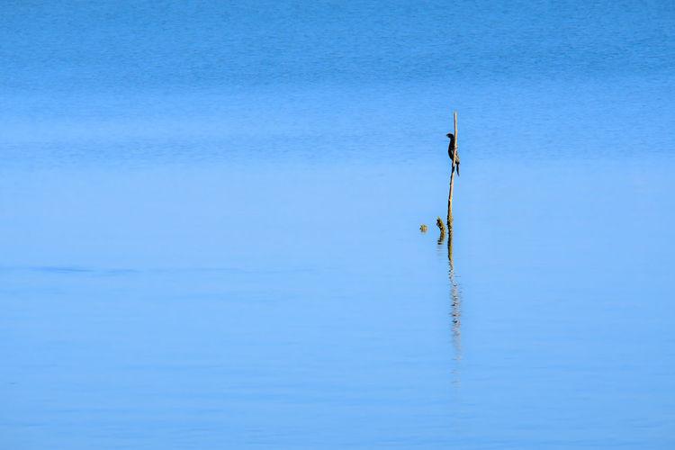 Wind turbines in sea against blue sky