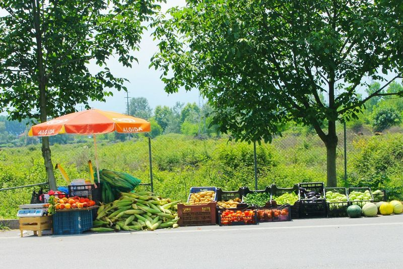 No People Day Tree Growth Food Outdoors Sky Nature Shopping Street Traveling Türkiye Culture Beauty In Nature Nature Beaitful Day Fruits And Vegetables Fruit Vegatablemarket Vegatable