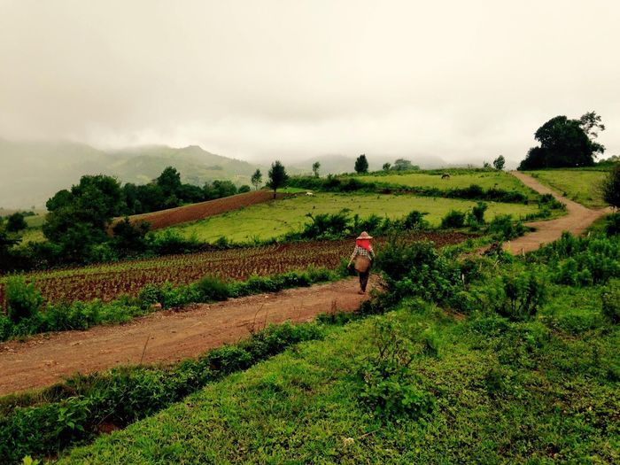 Indigohilltribe Burma Myanmar Hilltribe Trekking EyeEmNewHere Landscape Rural Scene Plant Environment Agriculture Land Field