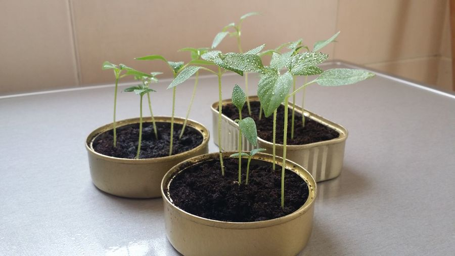 Close-up of pot plants on table
