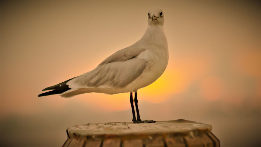 Close-up of seagull perching on pole against sky