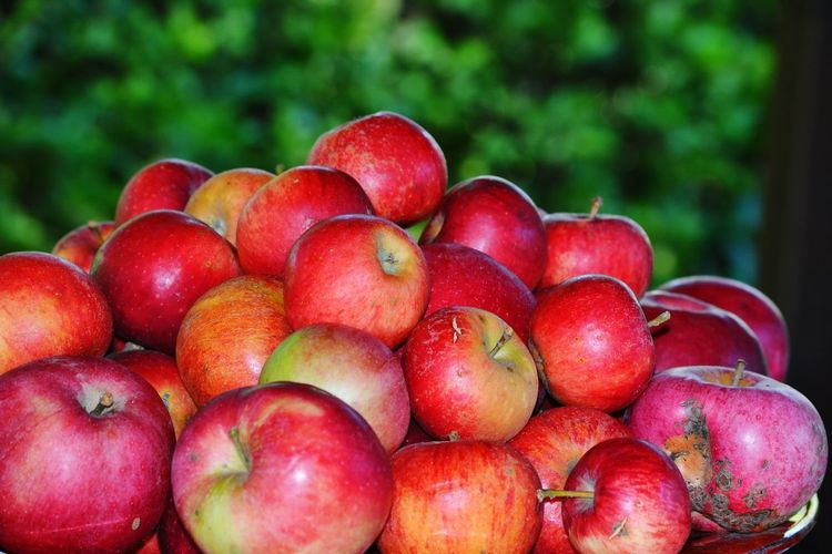 A lot of red apples Shot Of The Day Yummy Healthy Eating Tree Fruit Red Agriculture Healthy Lifestyle Close-up Food And Drink Apple Tree Harvesting Apple - Fruit Apple Juicy