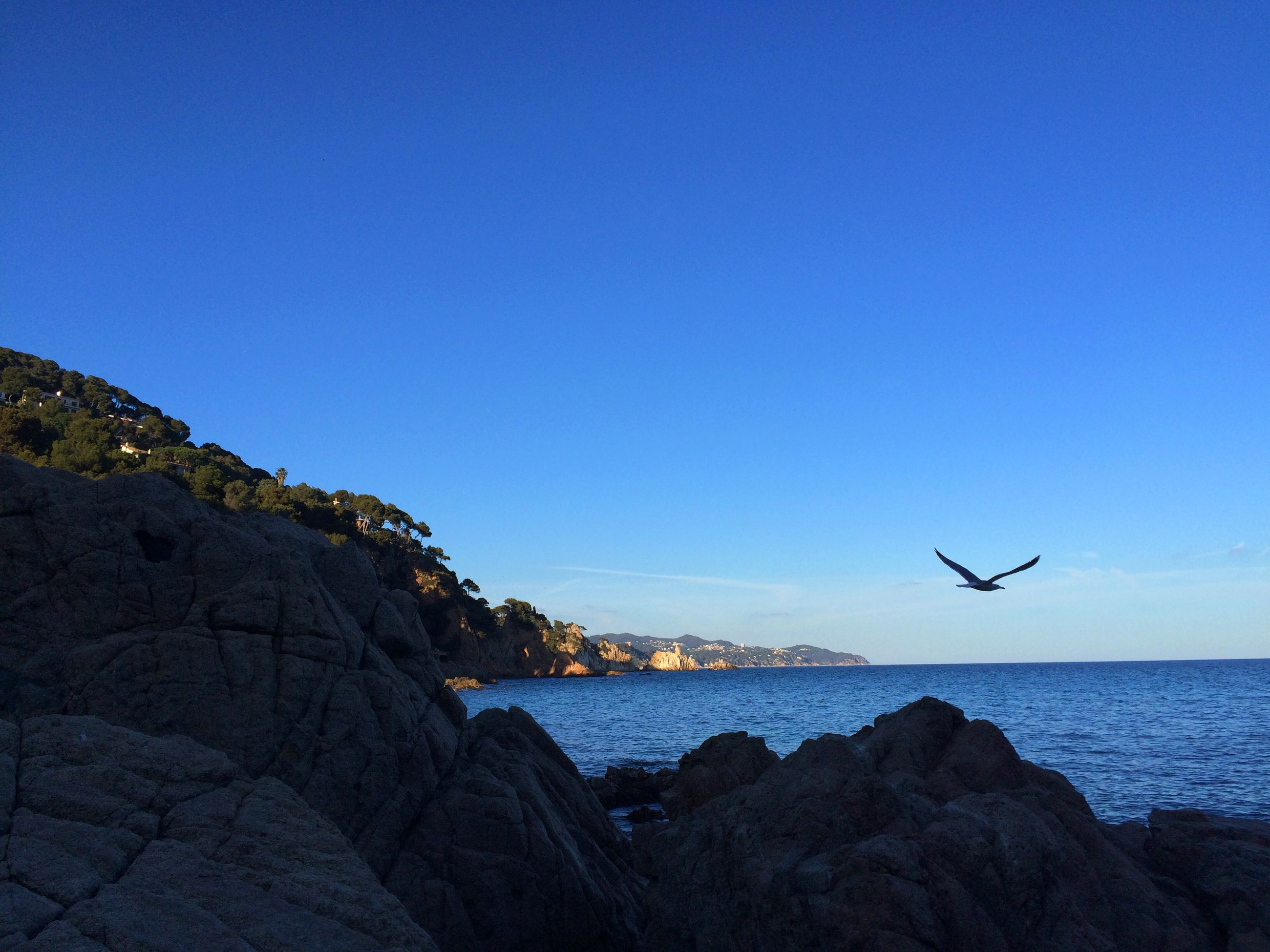 sea, water, blue, horizon over water, flying, copy space, clear sky, scenics, bird, beauty in nature, tranquil scene, rock - object, tranquility, nature, silhouette, sky, rock formation, mid-air, rock, wildlife