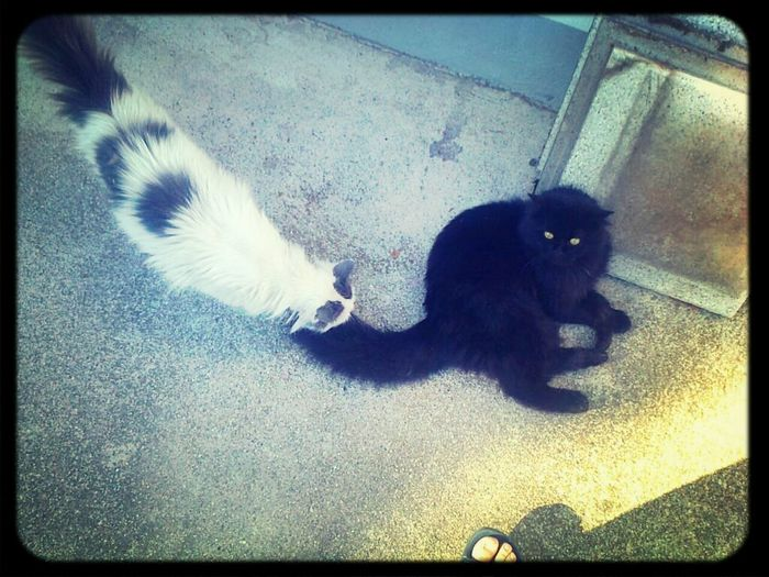 Taking Photos Hello World Check This Out My Daughter's Car. .Black. .in Love With White white cat. .they're happy. ..!