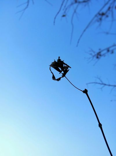 Simple Black Blue Sky Nice Day Lookingup Check This Out Tress Decline