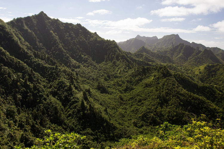Raemaru track in the mountains of the south pacific rarotonga, in the cook islands.