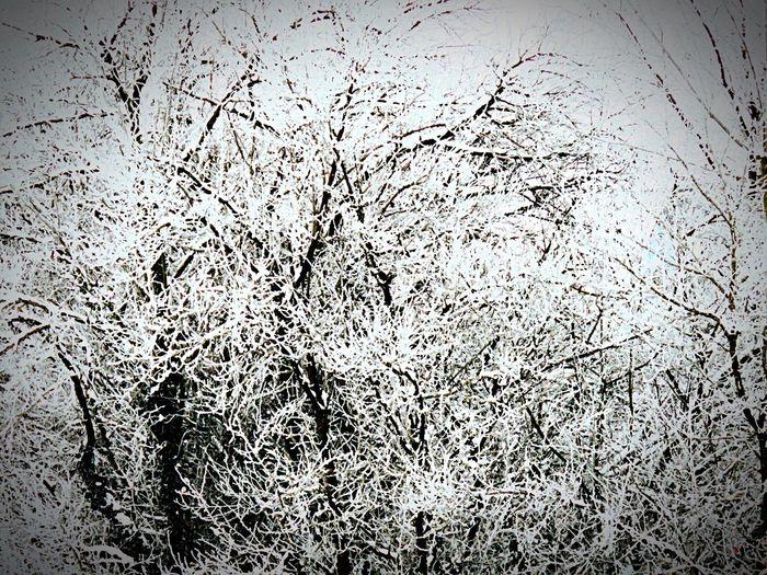 My Garden Garten Winter Taking Photos PowerShot SX60HS Retzstadt Germany Deutschland