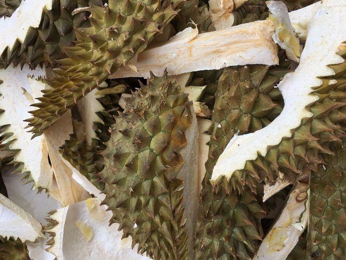 Durian shell No