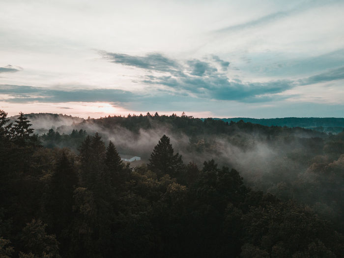 Scenic view of forest against sky in the morning fog
