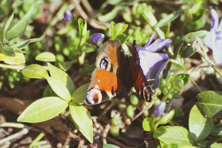 Little Butterfly Nature One Animal Animals In The Wild Beauty In Nature No People Day Outdoors Butterfly - Insect