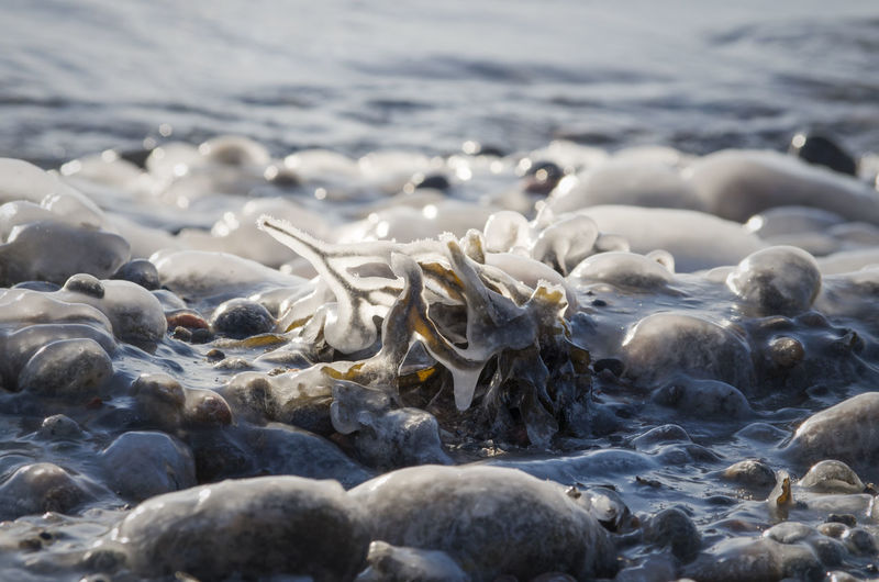 Close-up of frozen rocks in sea