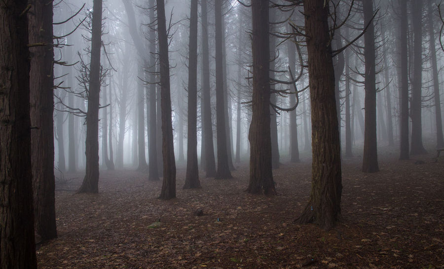 Forest with mist.Portugal Misty Portugal Sintra Autumn Beauty In Nature Day Eos77D Fog Forest Landscape Leaf Mist Nature No People Outdoors Scenics Tranquil Scene Tranquility Tree Tree Trunk Wilderness Area WoodLand