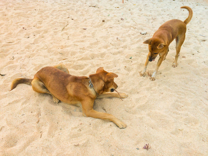 Animal Animal Family Animal Themes Day Dog Domestic Animals Lion - Feline Lion Cub Lioness Mammal Nature No People Outdoors Pets Playing Three Animals Togetherness
