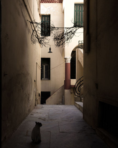 EyeEm Best Shots EyeEm Selects EyeEm Gallery EyeEmNewHere Alley Architecture Building Building Exterior Built Structure City Day Entrance Footpath Greece House No People One Animal Outdoors Residential District Street Vertebrate Window The Traveler - 2018 EyeEm Awards