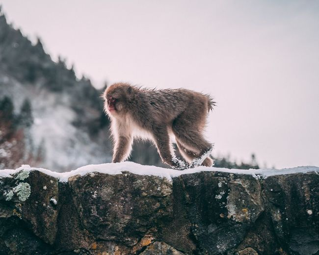 Low angle view of monkey crawling on snow covered mountain against sky