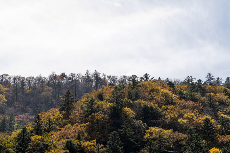 Scenic view of forest against sky during autumn