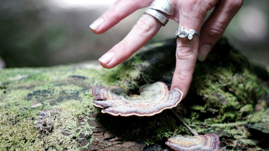 Cropped Image Of Hand Touching Mushroom Growing On Wood