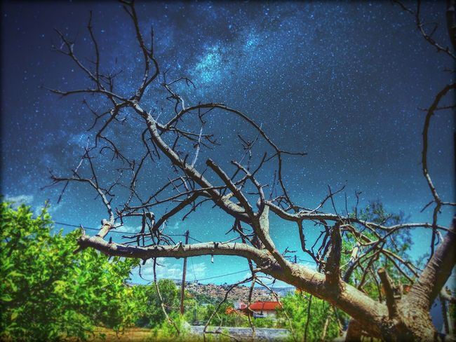 From here to eternity Branches Trees Nature Stars Sky Galaxy Greece Salamina