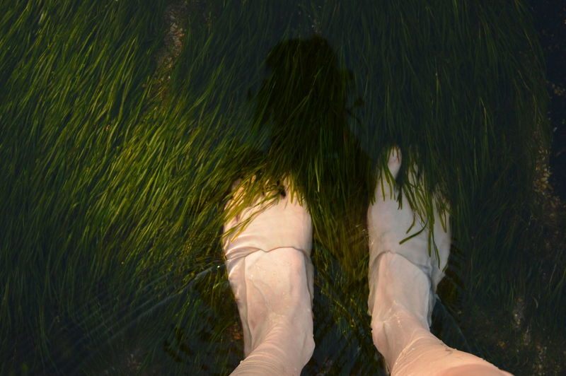 Low section of woman standing in pond
