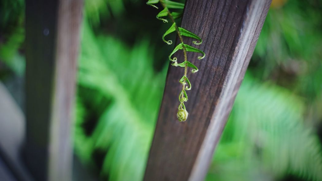 Hanging Close-up No People Day Love Green Color Focus On Foreground Outdoors Nature