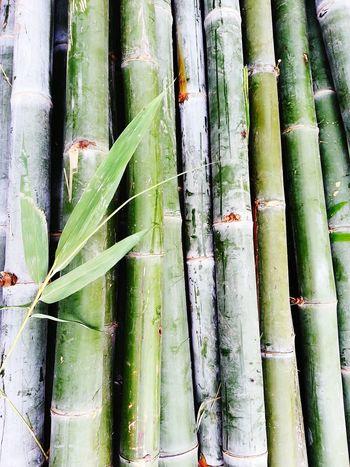 Bamboo Bamboo Art Bamboo Tree Bamboo Trees