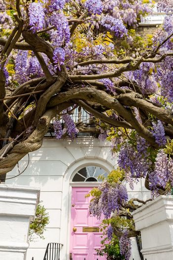 Low angle view of purple flowering plants against building