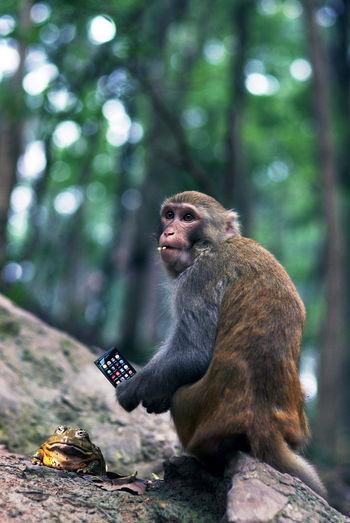 EyeEm Selects Monkey Pentax K5iis Fa77 F1.8 Limited Nokian9