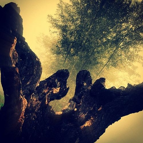 Instapadova Igerspadova Potdpd Padova Nature Beauty In Nature Scenics Tree Rock - Object Tranquility No People Tranquil Scene Outdoors Low Angle View Sky Day