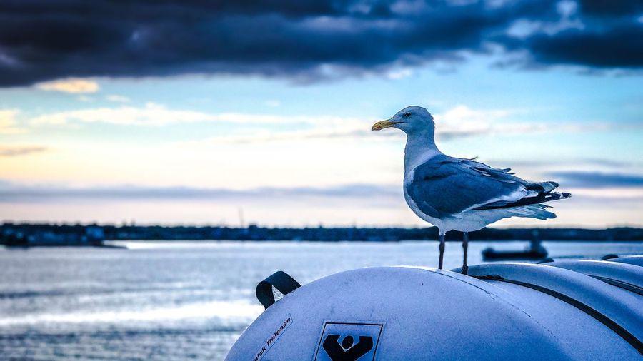 Seagull Ferry