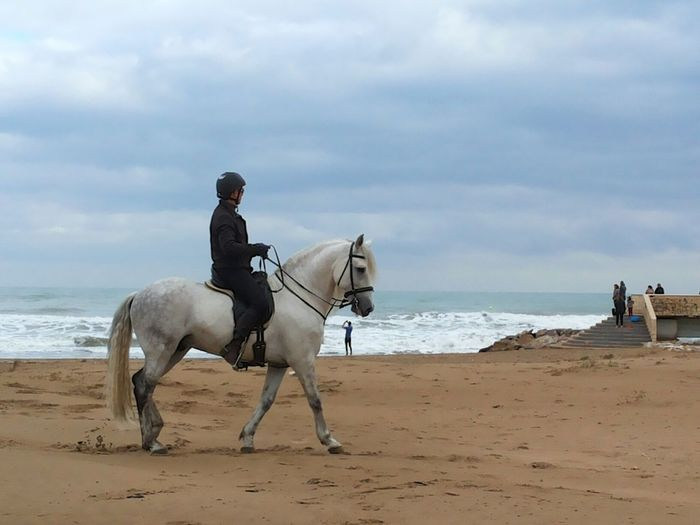 The less expected couple on the beach... Waiting Game White Horse Horse Horse Riding Horse Ride Winter Beach Horse Rider