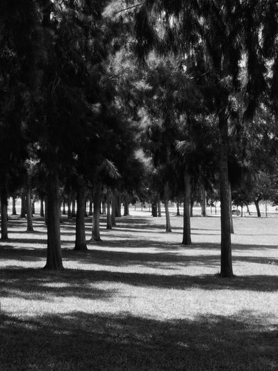 Tree Shadow Outdoors Sunlight Nature Tranquility No People Day Growth Tree Trunk Beauty In Nature Sky Black And White Takethemoment Blackandwhite Photography Shadows & Lights Black & White Catch The Moment Capture The Moment Lights Light Blackandwhite Light And Shadow Canonphotography Canon
