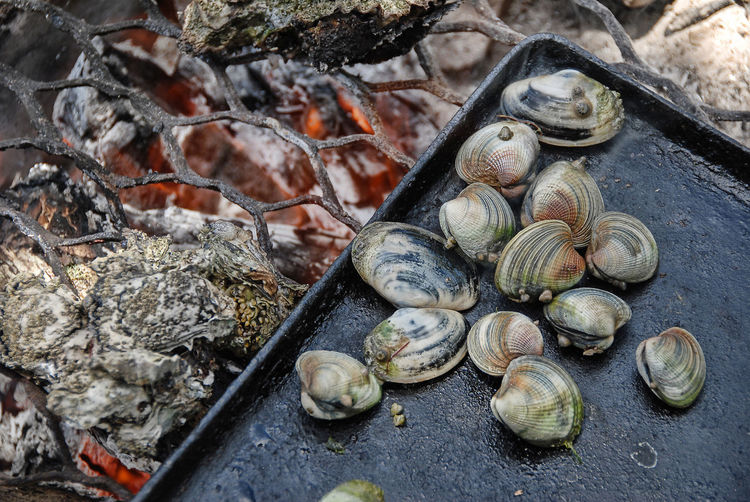 High angle view of mussels on barbeque