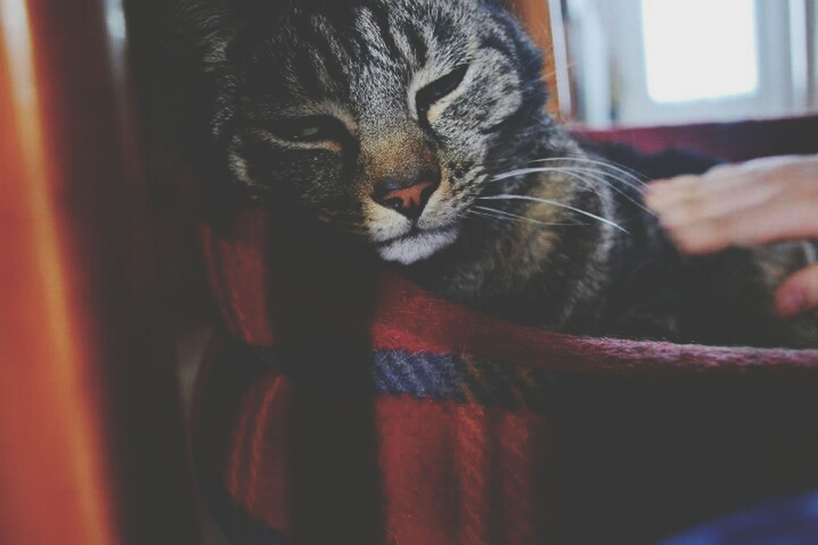 one animal, animal themes, domestic animals, pets, mammal, indoors, close-up, animal head, animal body part, dog, focus on foreground, whisker, domestic cat, part of, portrait, feline, looking at camera, cat, home interior