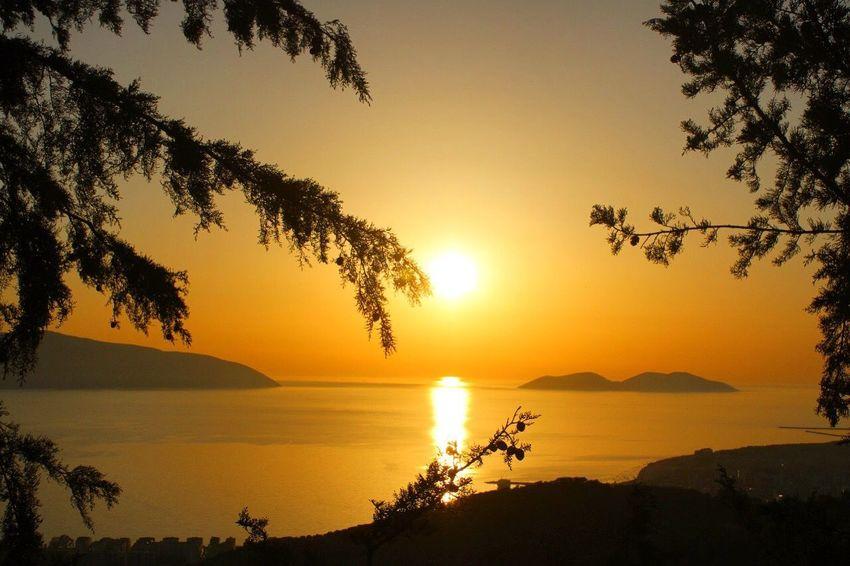 Sunset Water Sky Sea Beauty In Nature Scenics - Nature Tree Plant Sun Tranquil Scene Tranquility Silhouette Orange Color Sunlight Idyllic Nature Horizon Over Water Reflection Beach Horizon