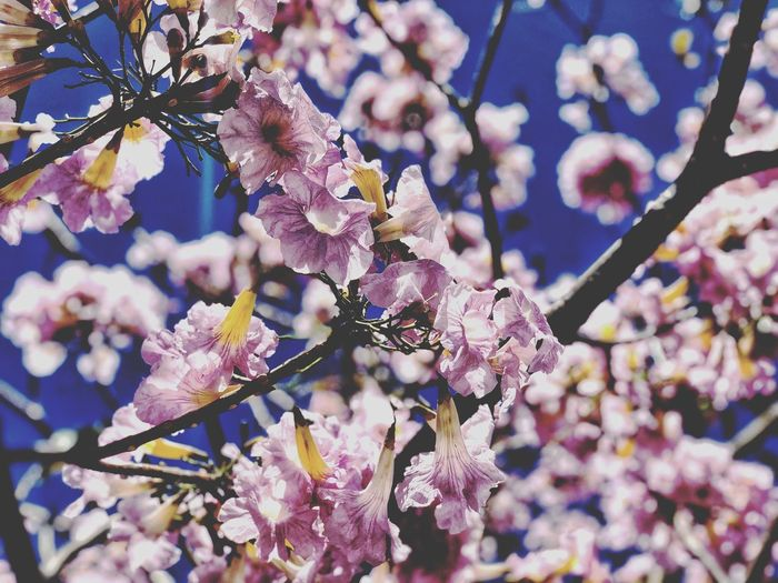 Plant Flower Flowering Plant Fragility Vulnerability  Growth Beauty In Nature Freshness Close-up No People Tree Nature Day Petal