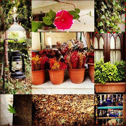 باغ فردوس و زیبایی های وصف نشدنیش.... 🌹🌱🍁🌸 Ξ મσઙઙειη κια Ξ Flower Nice Baghferdos باغفردوس Tehran Tajrish Hiking Cafe Cafegallery Cafecinama Parkmelat Vanak Art Mousq Bank